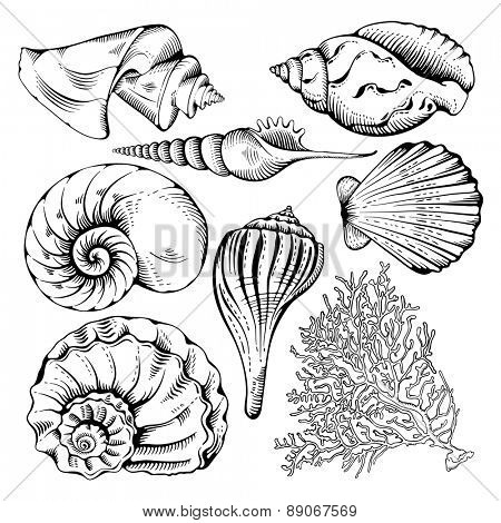 Vintage hand drawn collection of various seashell and coral. Isolated on white background. Vector illustration.