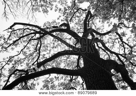 forest tree resembling the mythical Gorgon