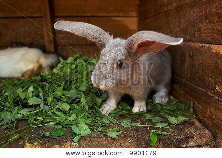 Bunny At Home