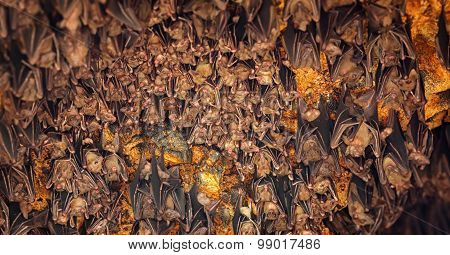 Bats Sleeping On Ceiling At Goa Lawah Temple In Bali