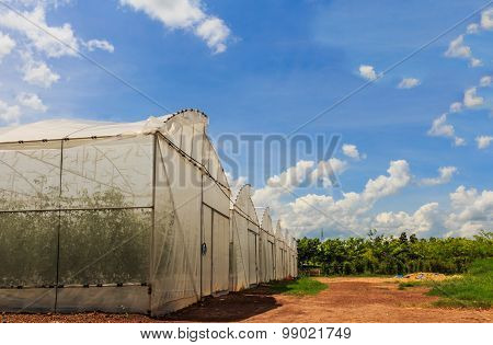 The Cultivation Of Melon Seedlings Plastic Greenhouses