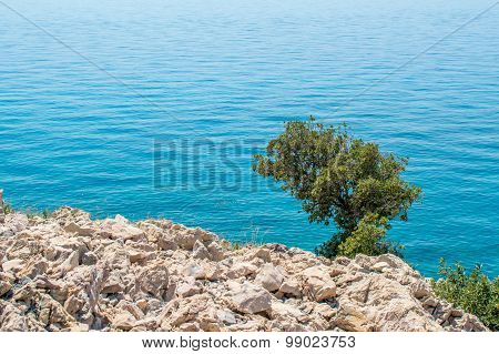 Rocky Coastline With A Tree And Bushes And The Crystal Blue Sea