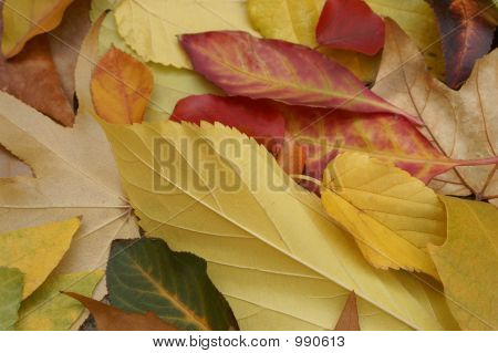 Variety Of Autumn Leaves/Closeup