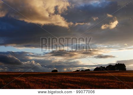 Cotswolds Barley Field & Sunset