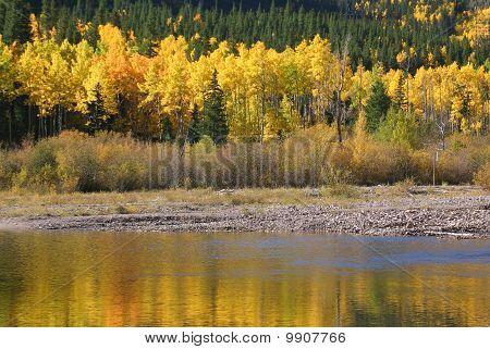 Colorado Aspen