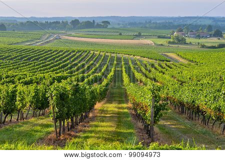 Vineyard Sunrise - Landscape-bordeaux Vineyard
