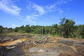 Deforestation environmental damage destruction of rain forest poster