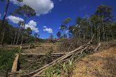 Deforestation environmental damage rainforest jungle being destroyed to make way for oil palm plantations poster