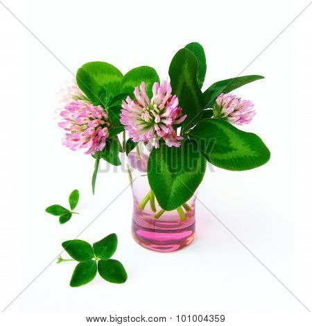 Four leaved clover and clover flowers