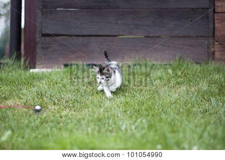 Cat Sleigh Bell