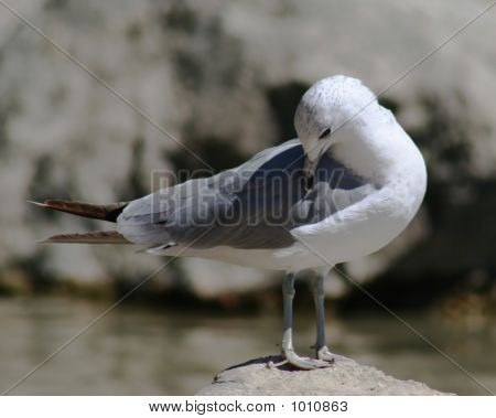 bird resting on rock by lake shore poster