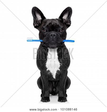 Dental Toothbrush Dog