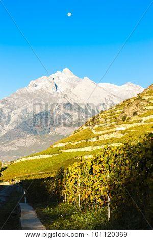 vineyards near Sion, canton Valais, Switzerland
