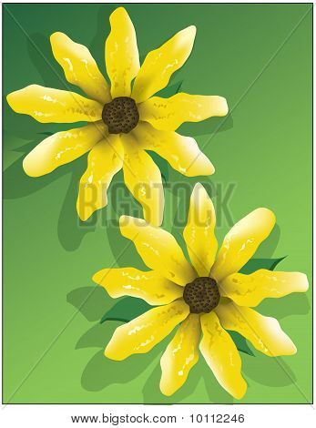 Yellow Flowers Showy Goldeneye