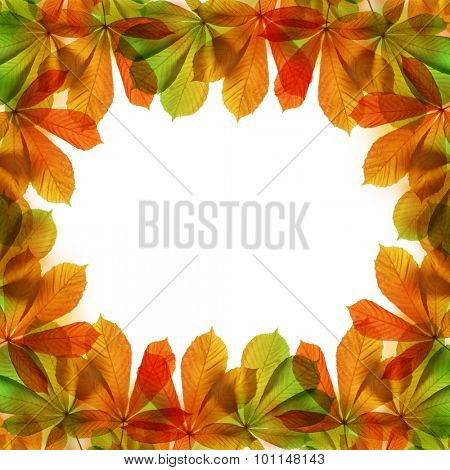 Frame from autumn leaves of chestnut tree (Aesculus hippocastanum)