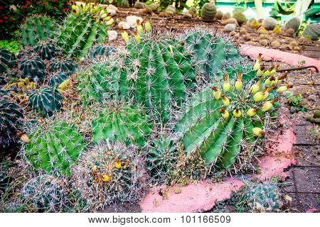 Different Kinds Of Cactus
