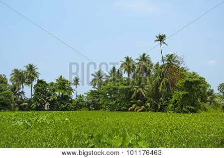View Of Water Hyacinth and clear sky