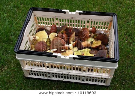 Autumn Edible Mushrooms