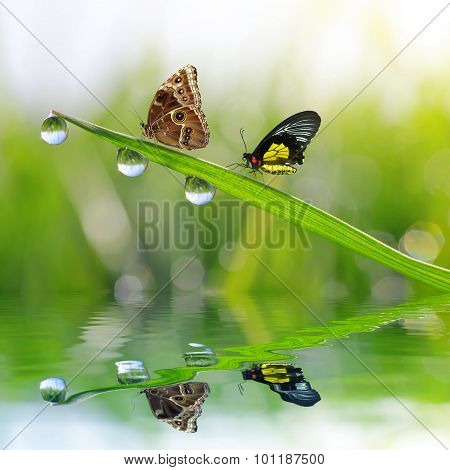 Fresh green grass with dew drops and butterflies.