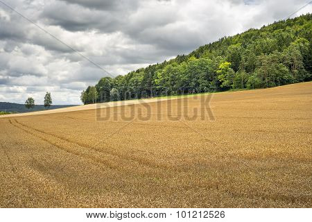 Wheatfield In Franconia Germany