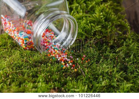 Nonpareils Strew On Moss