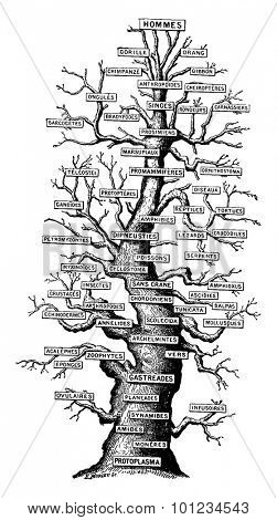 Family tree of life on earth, vintage engraved illustration. Earth before man - 1886.