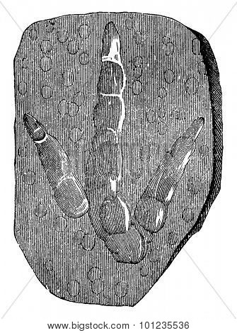 Footprints of brontozoum giganteum (Triassic) with imprints of raindrops, vintage engraved illustration. Earth before man  1886.