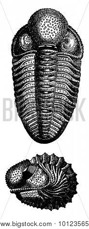 Crustaceans of the Devonian period, vintage engraved illustration. Earth before man 1886.