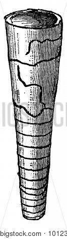 Orthoceras regulare, vintage engraved illustration. Earth before man 1886.