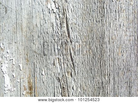 Old Painted Wood White Background Of Barn Door Texture