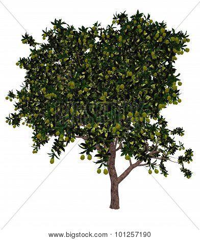 Mango tree - 3D render