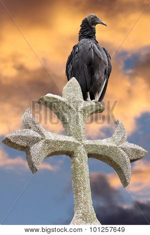 Vulture standing on Cross Tombstone with Sunset Sky Background