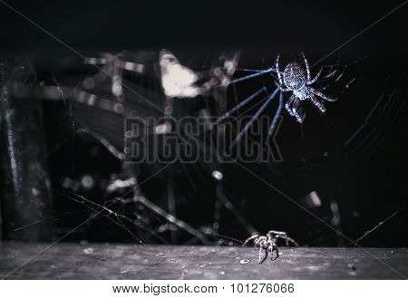 Spider In Dark Place
