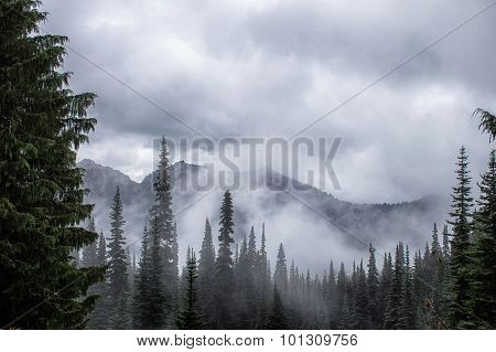 cloud, forest, and mountains