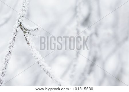 closeup photo of branch covered with frost