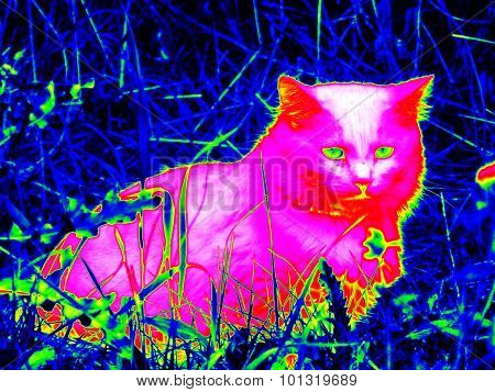 Infrared Cat On Grass