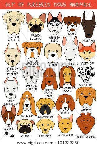 Set of 24 colored dogs different breeds handmade. Head dog