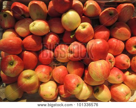 Box Of Freshly Harvested Apples From Denmark
