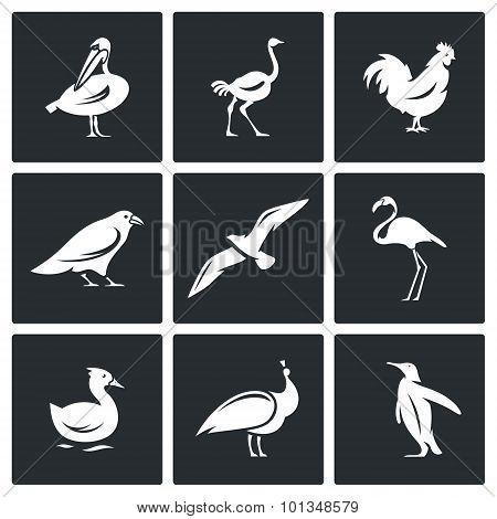 Birds Icons Set. Vector Illustration