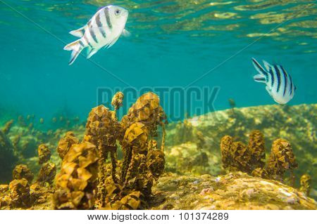 Coral Reef With Shoal of fish