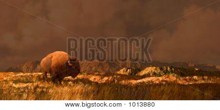 Buffalo In Wyoming