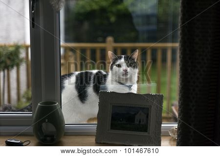 Cat looking in a window