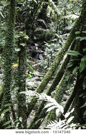 Tropical Jungle Detail Rainforest