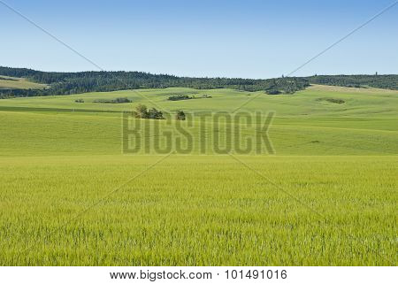 Alpine Farm