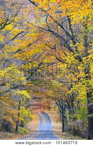 Road to Autumn forest - Shenandoah National Park, Virginia - USA