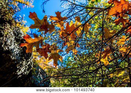 Beautiful Fall Foliage On Hamilton Creek, Texas.
