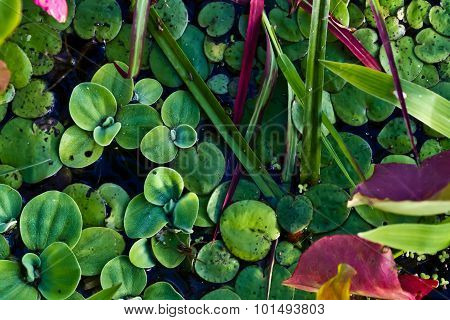 Closeup of Colorful Water Plant Life