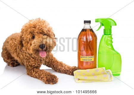 Apple Cider Vinegar Effective As Natural Flea Repellent And All Purpose Cleaner For Pets.