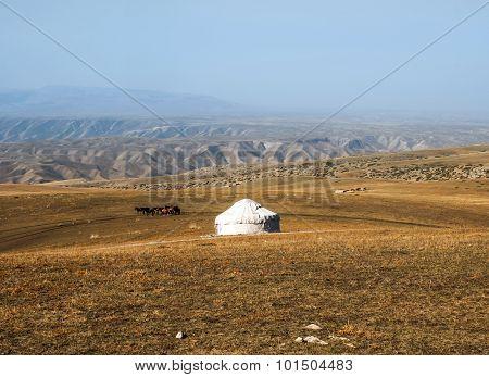 The grasslands of Mongolia.