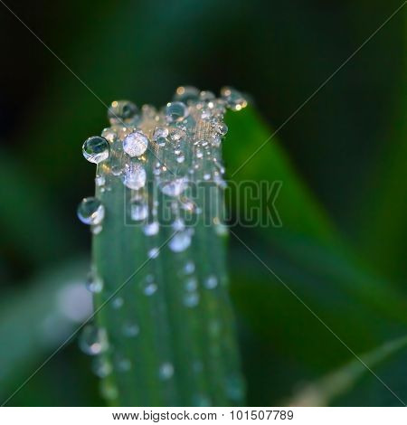Water drops of dew on green grass with soft focus